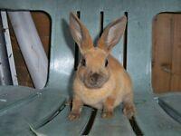 rabbits super cute