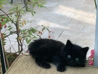 Maine coon | Cats & Kittens for Sale - Gumtree