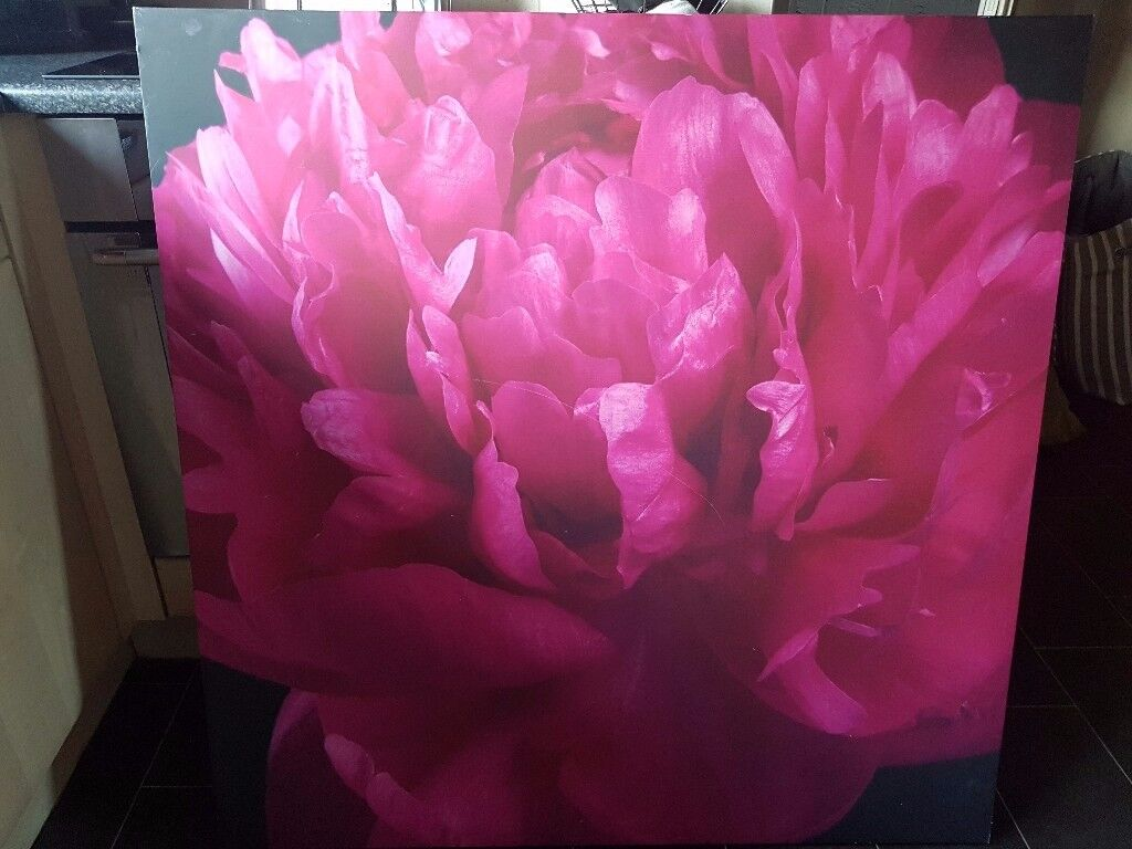 large pink flower canvas