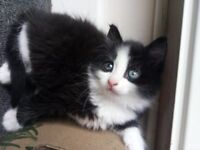 Lovely kittens looking for new home