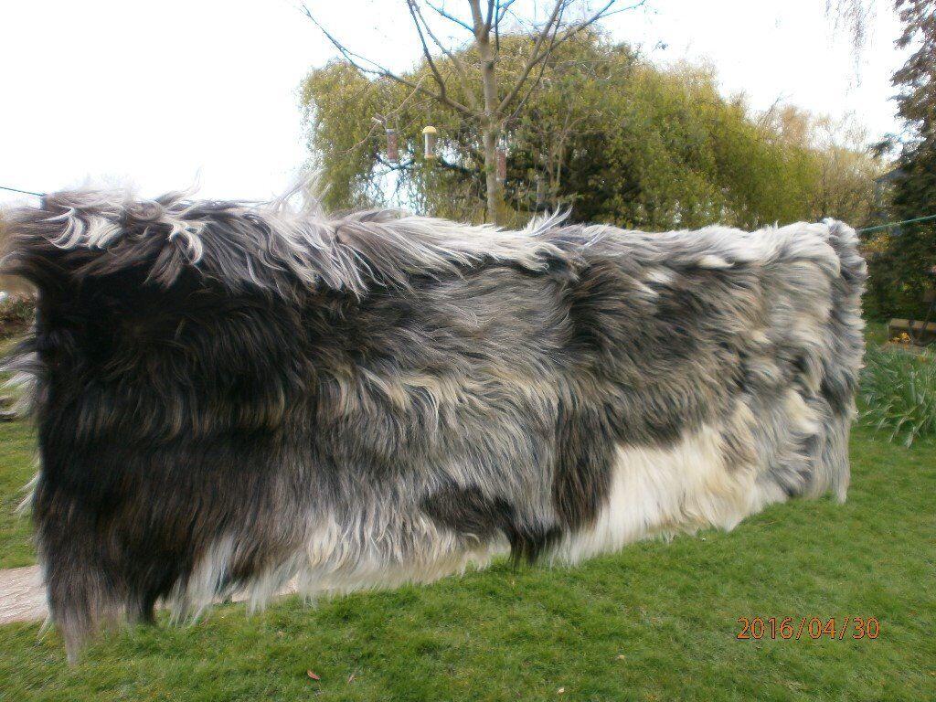 GOATSKIN RUGin NottinghamshireGumtree - LINED LONG HAIRED GOATSKIN RUG BOUGHT A YEAR AGO NEVER USED 6FT X 4FT £55