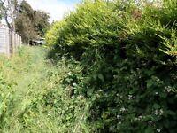 Darren walls gardening services we do grass cutting/garden maintenance/rubbish removal/