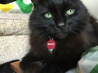 MISSING BLACK CAT MANSFIELD WOODHOUSE