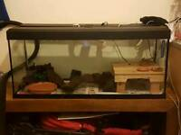 fluval 4 foot fish tank
