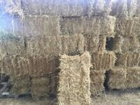 Small square bales of barley straw - this year's crop