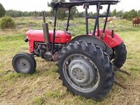 Massey Ferguson 65 - 1962 - good condition - in daily use. See video.