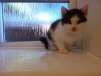 kitten ready for home