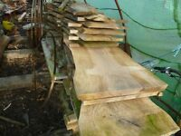 English elm planks/boards