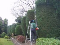 POSITION IN TREE SURGERY TEAM - no climbing required, but experience with hedgetrimming essential