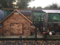 Chickens and house for sale