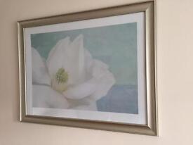 Framed White Lily Print