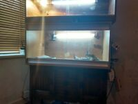 selling 3year old female dragon with xl cage and full setup