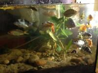 Koi fish aquarium pond fishtank