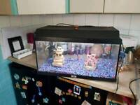 Juwell fish tank and accessories 40 ono