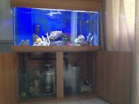 marine tank and stand 350 ono