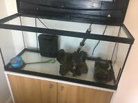 Fisk Tank and cabinet - full set up