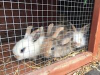 Rabbits for sale!