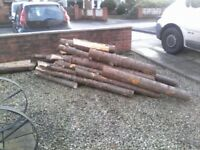 HUGE PILE OF LARGE LOGS