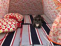 £250 cash reward offered - Grey/White Cat Missing from Donnington Bridge Area