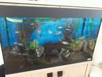 Aquarium complete fish tank Quick sale
