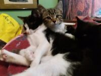 beautiful cheeky kittens