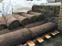 Regal turf - 12 sq metres available