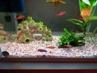 11 tropical fish free to good home