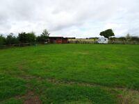 DIY Horse Grass Livery, £15.00 per week, near Kelso