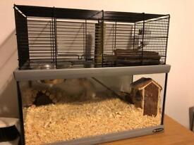 2 gerbils and gerbil cage