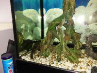 fish tank+fish+unit