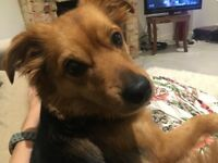 Gorgeous dog needs new home.