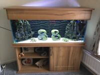 200 litre oak aquarium in perfect condition with all accessories .