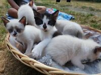 5 kittens looking for a home