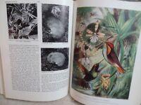 Oxford junior encyclopaedia 1956 - 12 volumes good condition