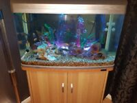 Aqua one AR-850 aquarium tank with full set up