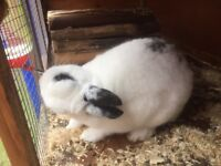 2 male rabbits needing re-homed