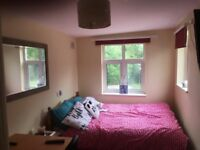 Ground floor fully-furnished private ensuite double room in a friendly family house in Botley