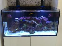 Stunning ea Marine900 Aquarium Tank Full Set Up
