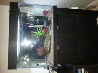fish tank & fish and accessories.