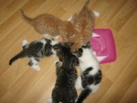 Gorgeous kittens for sale
