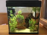 FISH TANK Aand SHRIMPS - full set up