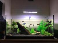 112L Aquarium and setup