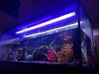 Tropical Fish Tank / Fish