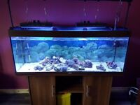 RIO 400 5ft marine Fish Tank with stand
