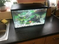 Fish tank with built in led light,gravel, and ornaments size is 50x25x30 cm