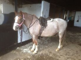 13.2 Pony for Loan or Share