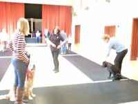Dog Training classes, puppy class and Rally obedience