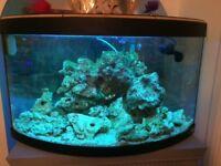 Marine fish tank and fish