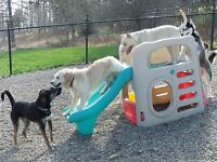 Hound Tales Inn : Dog Daycare and Boarding