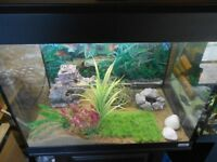 Fluval Roma Aquarium with stand and external filter/heater